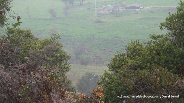 Humedal El Conejito en el nacimiento de la quebrada La Salitrosa