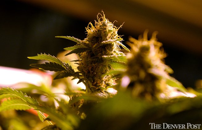 JUST IN: Historic Vermont marijuana legalization dies in House; other reforms still on table