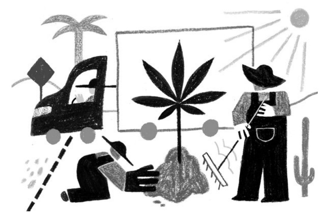 Legalized Pot, Free Trade #prohibition #USA #mexico #law