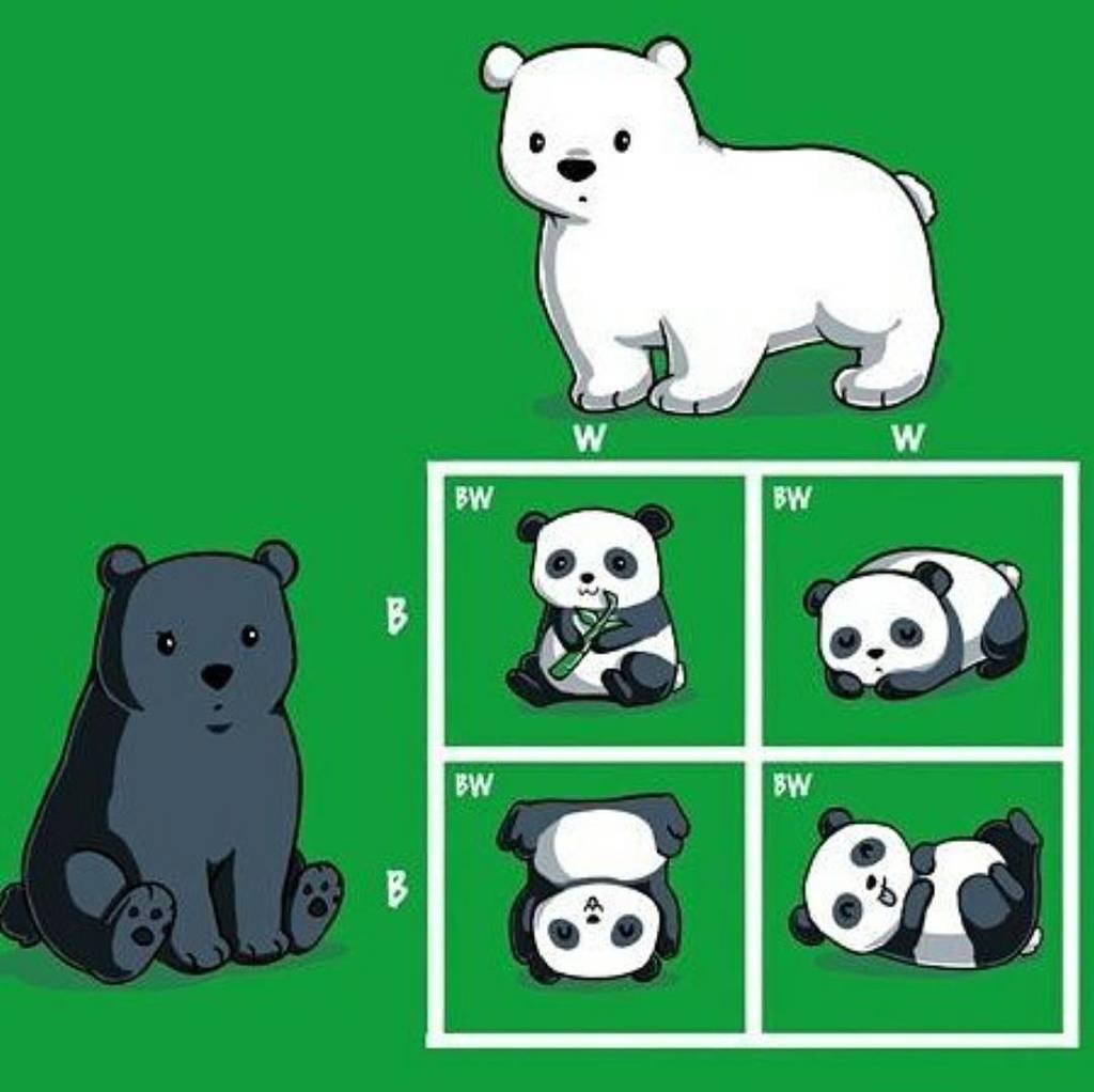 Sciencealert On Twitter Punnett Bear I Mean Punnett
