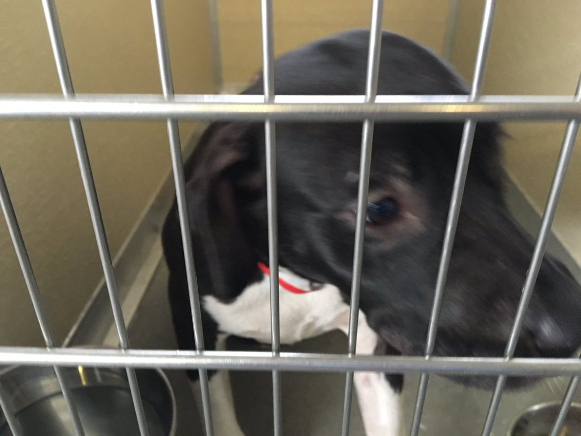 2 dogs tied to hedges, left outside Tampa shelter in one week. Photos, video