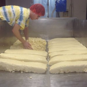 Anthony turning slabs of cheddar cheese