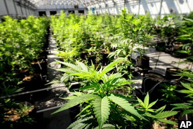 25 states have legalized medical marijuana. Why doesn't the DEA view it as medicine?