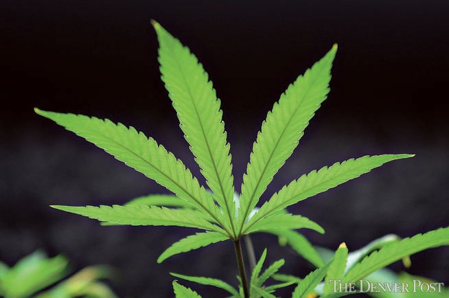 Did Microsoft, the third most valuable company in the world, just jump into the pot biz?