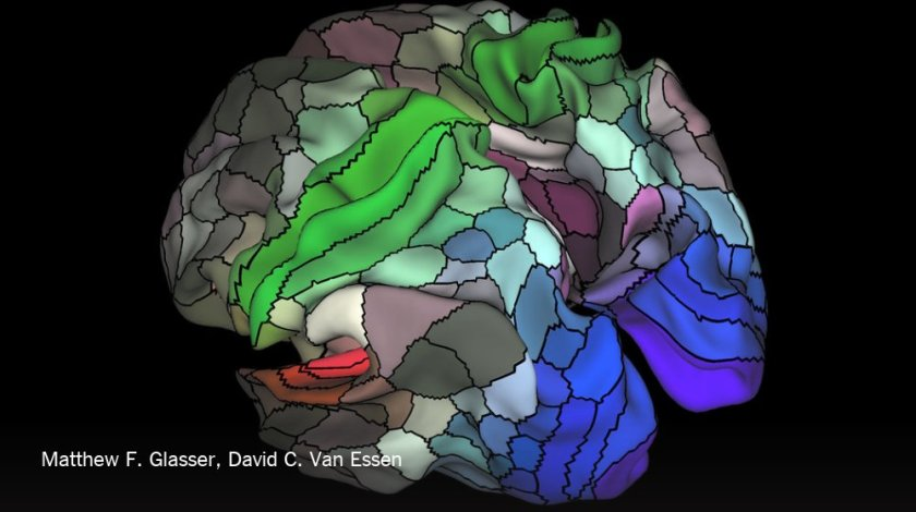 This new map of the brain was made with artificial intelligence to identify hidden regions