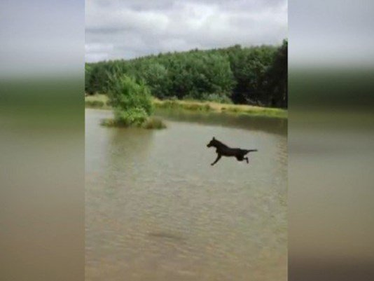 Wrong place, wrong time: Dog gets blindsided by reveler sliding through water ride