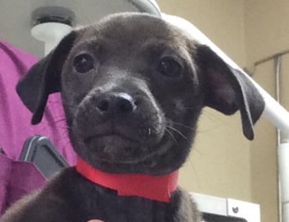 This puppy, named Iris, was STOLEN from the @HumaneTampaBay! Watch surveillance vid here: