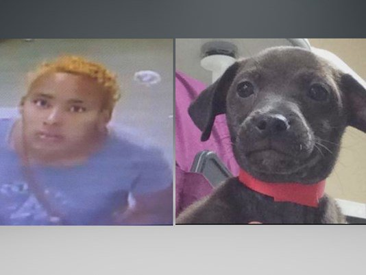 Puppy stolen at @HumaneTampaBay . @TampaPD looking for this man dressed in women's clothing