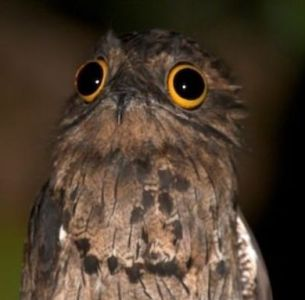 Leesha Hannigan on Twitter   My patronus is a Potoo bird      1 23 PM   22 Sep 2016