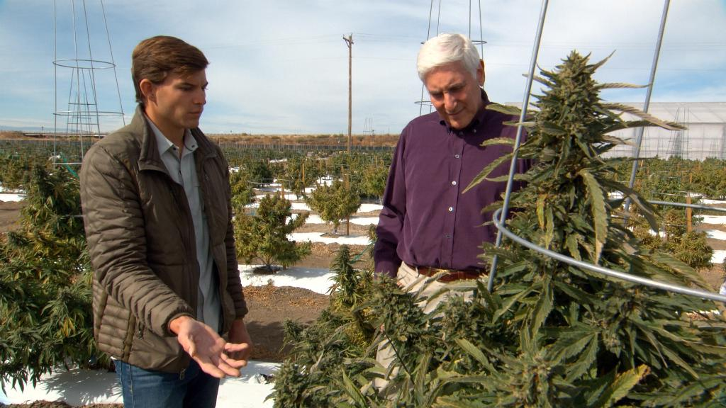 .@DrLaPook reports on the vote to legalize recreational marijuana, Sunday's #60Minutes: