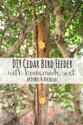Love birds? Make a DIY cedar bird feeder with homemade suet!