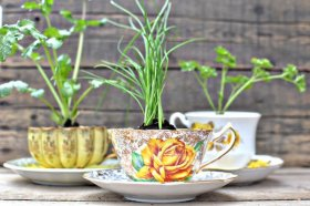 Discover how you can add some plant life to your home. diy garden