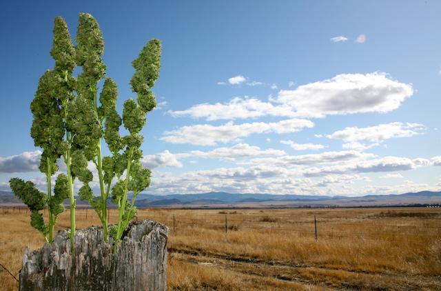 North Dakota just passed a medical #Marijuana initiative. Read about it here!