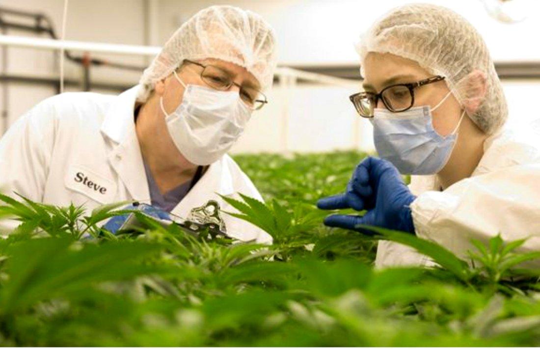 Ex-Big Pharma Executive Behind OxyContin Sells Medical Marijuana #bigpharma #MMJ Canada