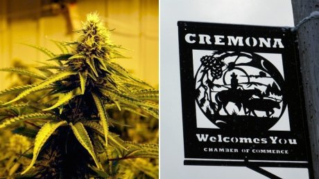 Fear and loathing in Cremona gives way to optimism of a marijuana-fuelled recovery