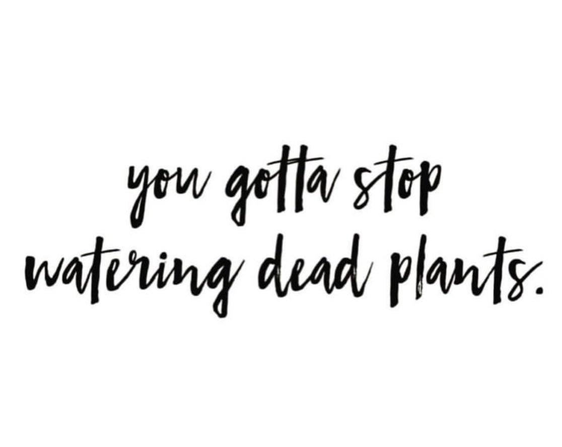Image result for quit watering dead plants