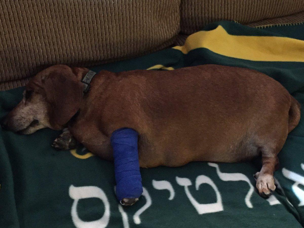 Precious Dogs My Dog Has A Lump Lipoma Dogs Fatty Tumor Dog