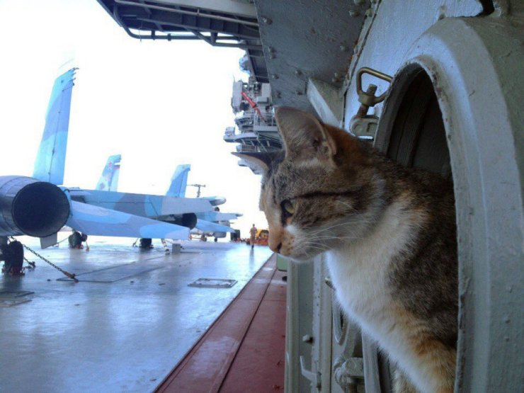 CzsvE_wWIAAEY7X Коты на службе Отечества