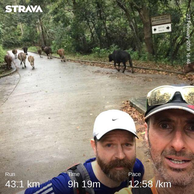 Wilson trail run sections 10–6: wild cows, boar, macaques, & dogs