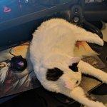 Quasar Cats Watchquasarcats Twitter