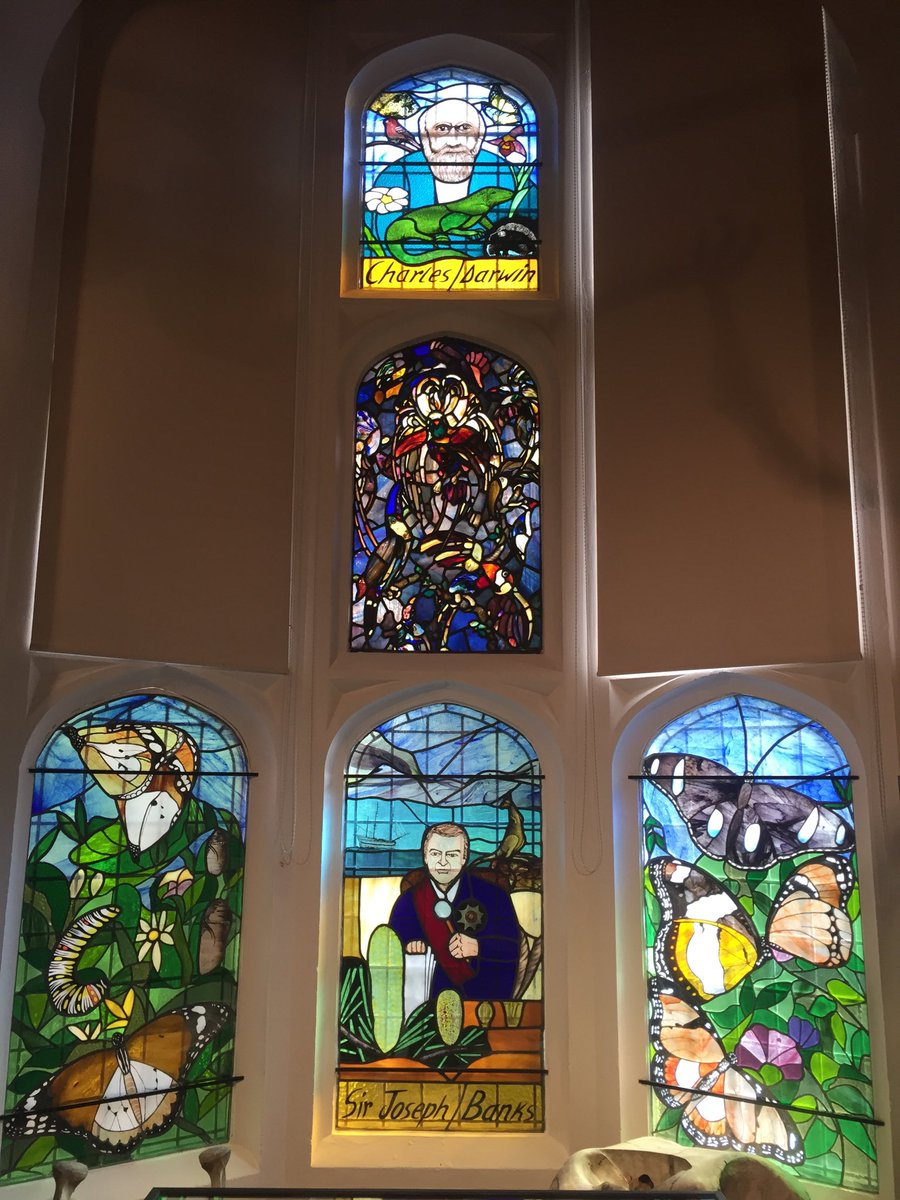 Our wonderful array of stained glass featuring Sir Joseph Banks, Charles Darwin and the life cycle of The African Queen butterfly and its mimics…