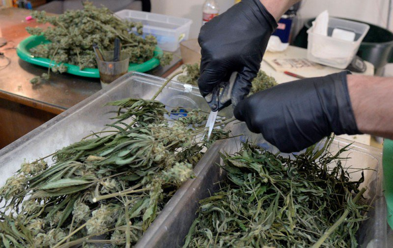 Hello, what's this? Big bags of weed found by freeway litter cleanup crew