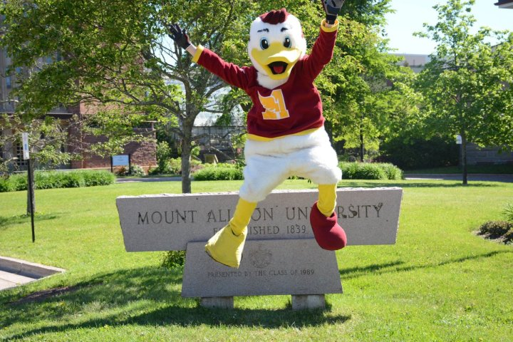 "MtA Admissions on Twitter: ""Monty is hiding in the @MountAllison ..."