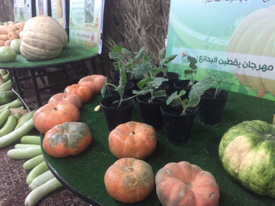 د مزارع On Twitter مهرجاناليقطينصيفالبدائع كان النبي