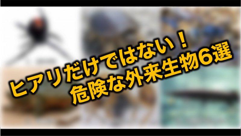 test ツイッターメディア - ヒアリの侵入に脅かされている日本列島。改めて外来生物の脅威を思い知らされた。はたしてヒアリは日本の気候になじめるのか?すでに定着した危険な外来生物の生態とともに、現況を緊急取材! ▼閲覧注意(虫が苦手な方など) https://t.co/kTjLvxiKve https://t.co/y9VZ0nrLWX