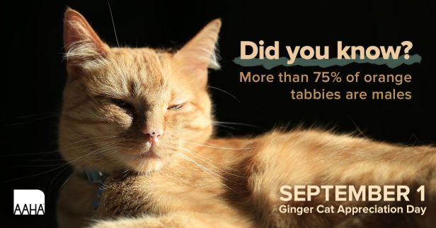 Ginger Cat Appreciation Day