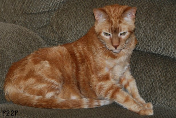 Image result for Ginger Cat Appreciation Day