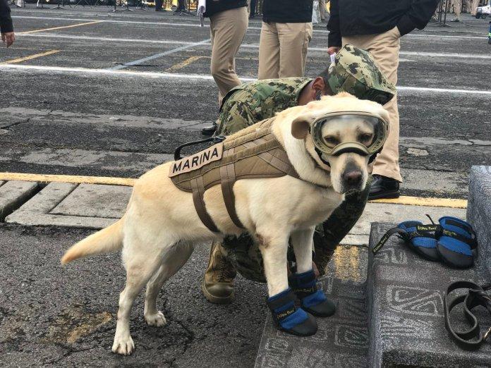 Frida, la perrita rescatista