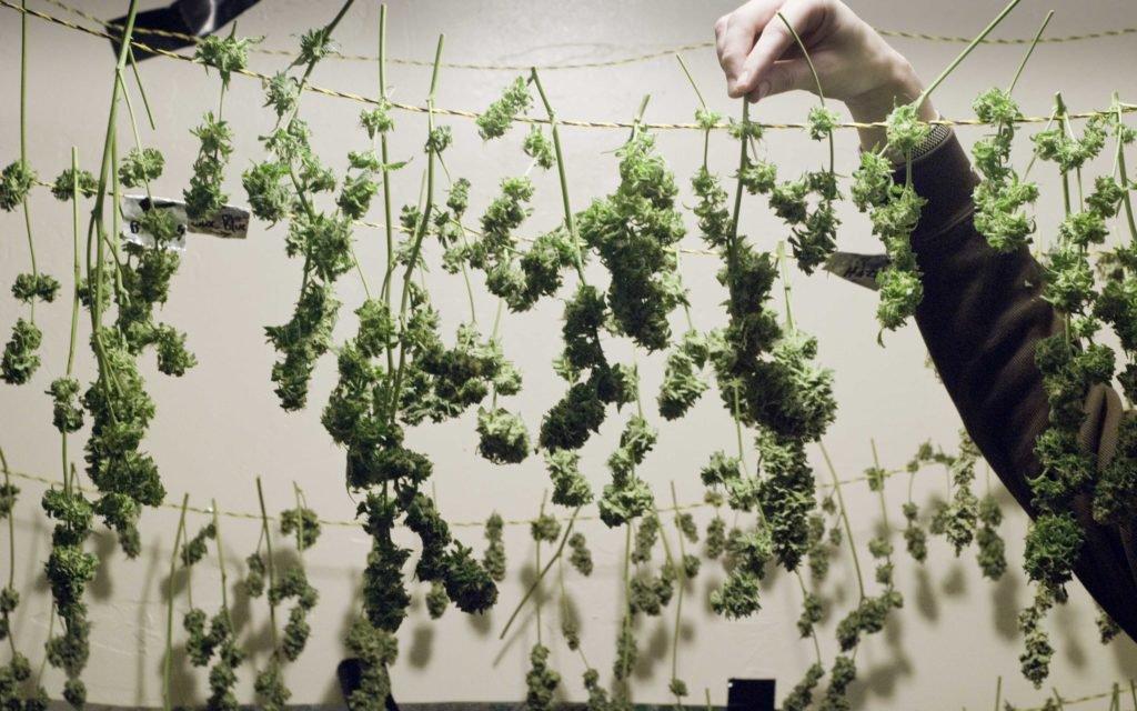 🙏 Florida's Medical Marijuana Supply Survives Hurricane Irma.