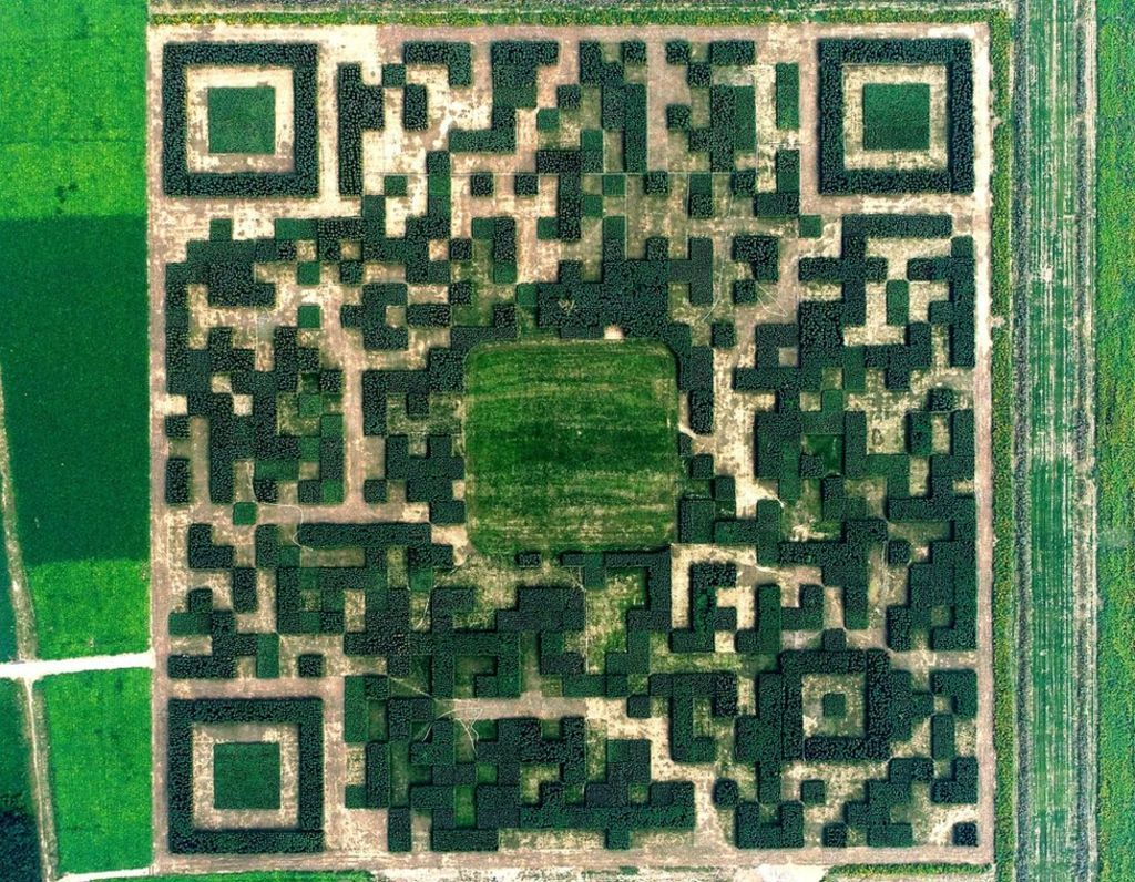 Chinese Village makes giant QR code from trees    #fintech