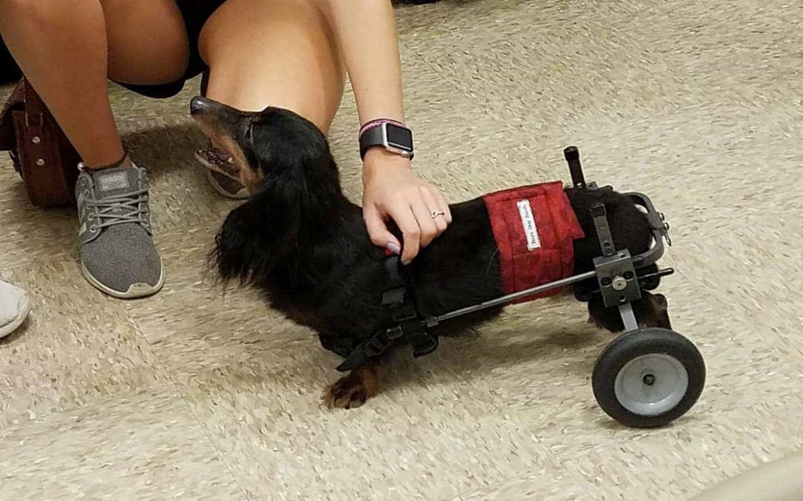 This Pup Is Miraculously Able to Stand Again Thanks to Cannabis. 🐶