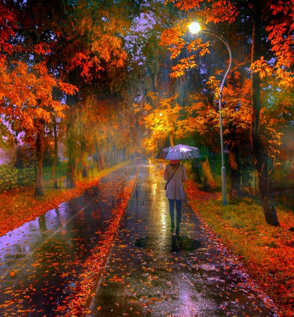 """Игорь-сан on Twitter: """"#Rain in Autumn Park ... Photo by ..."""
