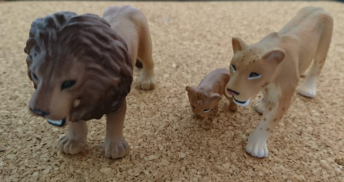 test ツイッターメディア - パンダとライオン、親子になったよ(^_^)可愛いから買ってしまった✨パンダの子供・ライオンのメスと子供付き #アニア #タカラトミー https://t.co/bLYnulewgD