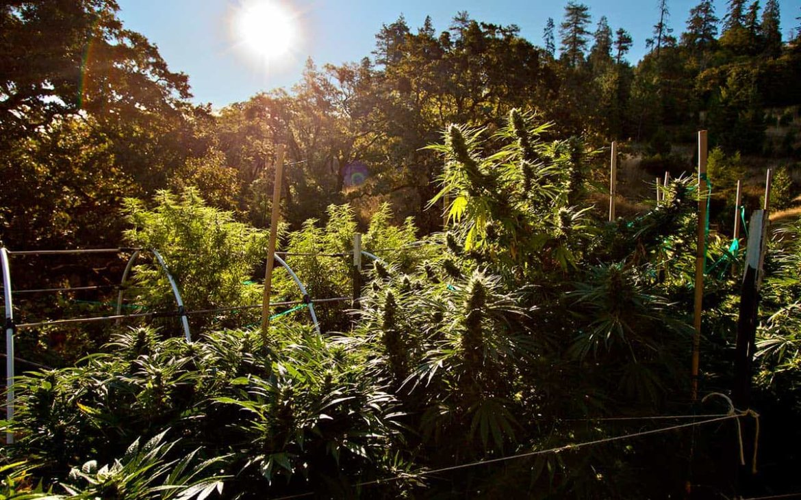 Take a page from the Emerald Triangle's playbook with these grow tips from@HumboldtFarmers.
