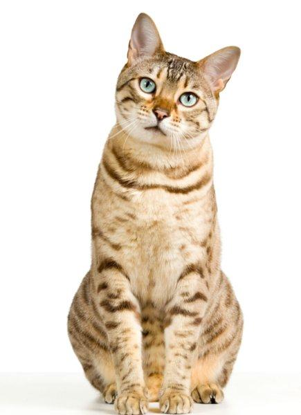 test ツイッターメディア - 署員が猫の世話に追われ仕事できず 中国の警察署がSOS https://t.co/eOUmvv9Un2 SNS上で、中国江蘇省の警察署が猫に「占拠」されたとSOSを送った。ペット強盗の犯人を逮捕し、69匹の猫を保護することになった警察署。署員が猫の世話に追われるため、引き取り手を募集しているとのこと… https://t.co/o41PckimNt