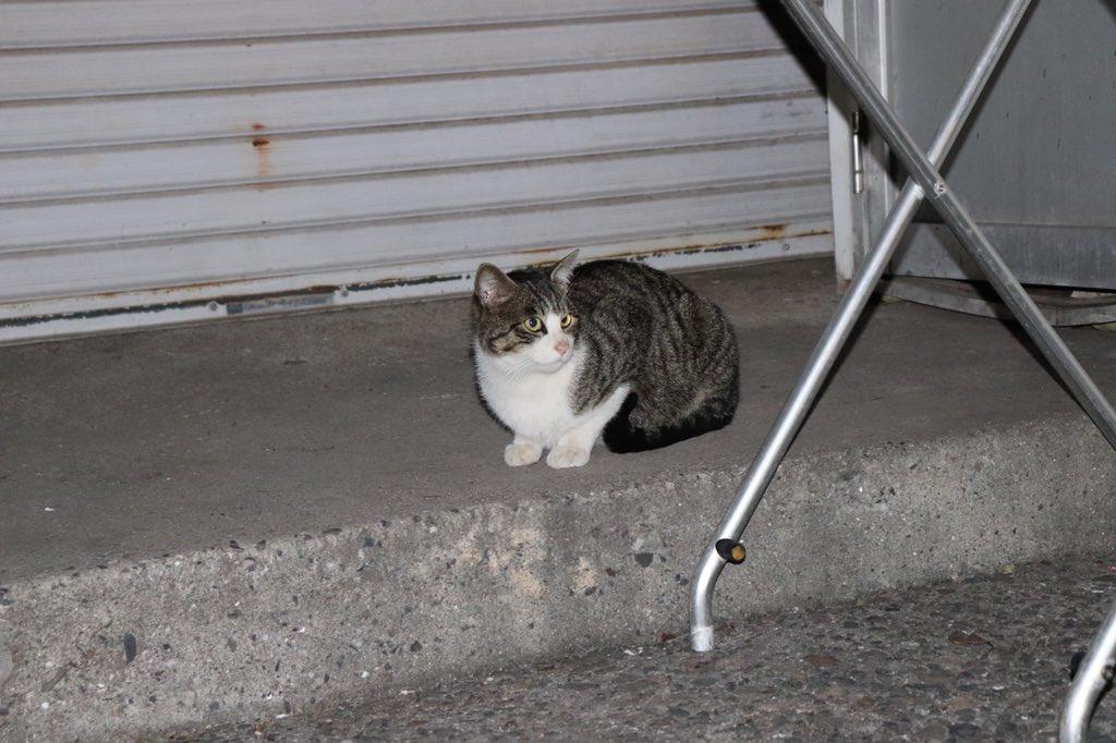 test ツイッターメディア - このネコ、三四郎の小宮に似てる https://t.co/Rqj6zMg4c2