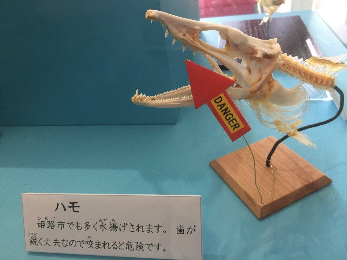 test ツイッターメディア - 姫路水族館の危険生物展行ってきた。生体展示は少な目だけど、生きてるヒョウモンダコ見たの初めてでテンションあがったー。標本だけどヒアリも初めて見た。画像は、なんかシューティングボスっぽい矢印をもつ骨格標本たちと強そう(物理)なおシャコ。展示は3/5(月)まで。 https://t.co/sNUqTQUV6q