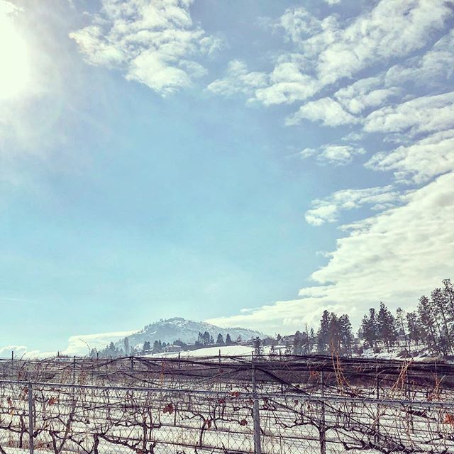 test Twitter Media - RT @Westwinetrail The sun was shining bright over the vineyards today. We saw lots of activity in the some of the vineyards with spring pruning. #westsidewinetrail #vineyardlife #okanagan #bcwinecountry https://t.co/f9VFlmVtVB https://t.co/dvb1eLchGn