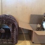 Wirecutter On Twitter Well Not Everyone Guide To Cat Beds Coming Soon Once We Can Convince The Cats To Try The Beds