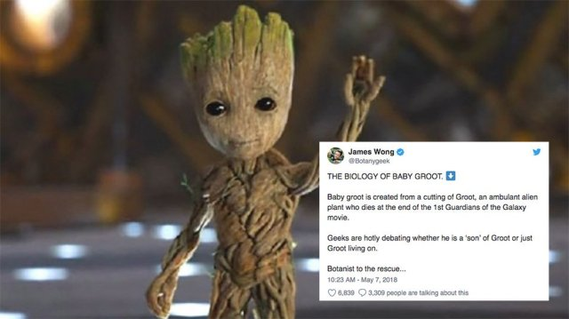 You might not like this botanist's detailed explanation of Baby Groot's...