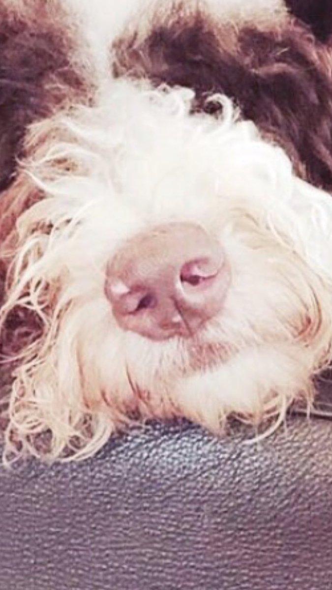 test ツイッターメディア - キムタクの娘kokiが、Instagramに愛犬との2ショットをUPしたらしい。 鼻のせいで愛犬がどこだか分からない、オッサンの顔に見える、とか話題になって見てみたけど、どう見てもガチャピンだった。  ガチャピンだった。 https://t.co/i4FoFSV0LF