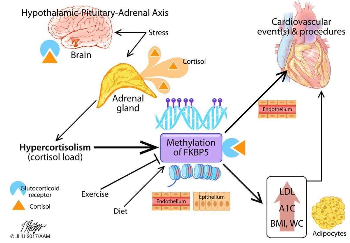 Ensembl On Twitter High Dna Methylation At Fkbp5 Gene
