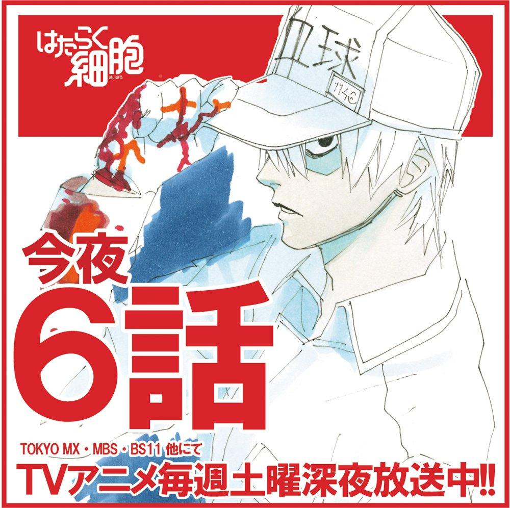 【情報】月刊少年シリウス編集部的《工作細胞》動畫第6話宣傳 ...