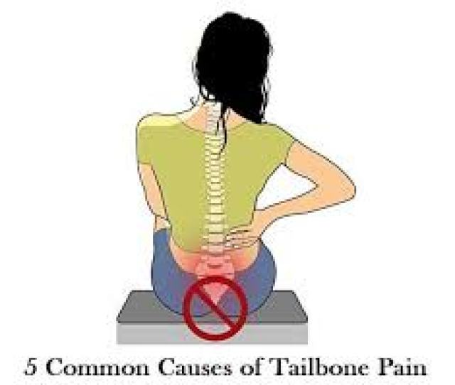How Do You Stretch Out Your Tailbone Many Pelvic Floor Muscles Insert Into The