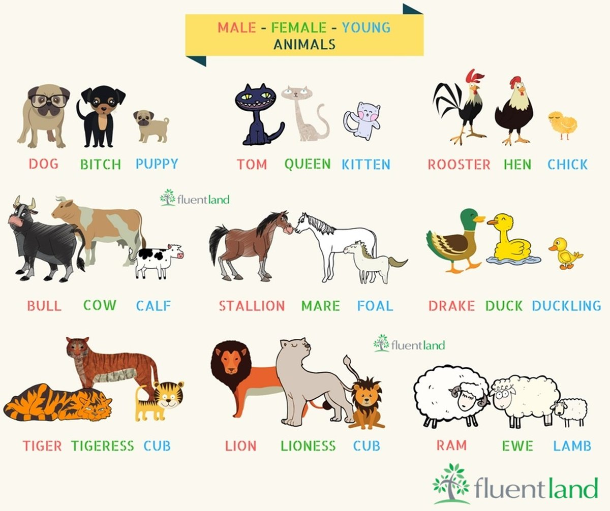 Shinearly English Center On Twitter Many Animals