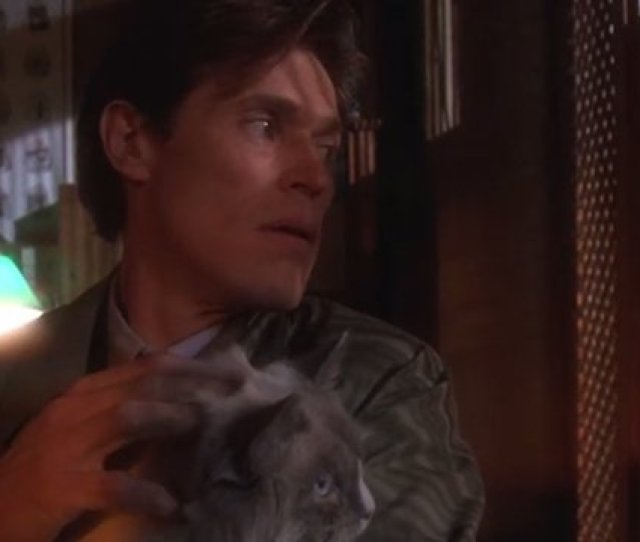 Saturday Cat Gets Picked Up And Petted By None Other Than Willem Dafoe In The Steamy Thriller Body Of Evidence 1993 Pic Twitter Com Uxqz2vr8jo